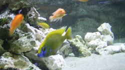 Dekoration im Aquarium Becken 1166