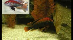 Besatz im Aquarium Becken 118