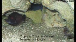 Besatz im Aquarium Becken 119
