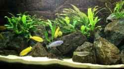 Pflanzen im Aquarium Elmar´s Malawibadewanne