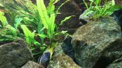 Dekoration im Aquarium Elmar´s Malawibadewanne