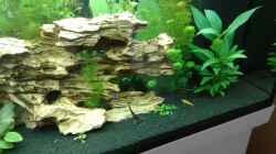 Pflanzen im Aquarium Becken 1194