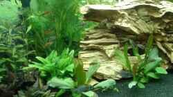 Besatz im Aquarium Becken 1194