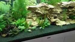 Aquarium Becken 1194