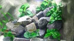 Dekoration im Aquarium Becken 1196
