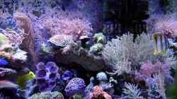 Dekoration im Aquarium Becken 12156