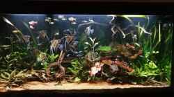 Aquarium Naturaquarium Südamerika
