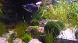Dekoration im Aquarium Becken 12199