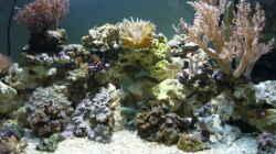 Aquarium Becken 12314