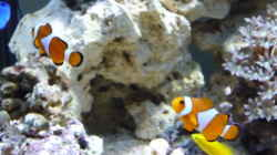 Besatz im Aquarium Becken 12314