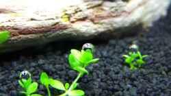 Pflanzen im Aquarium NC20-01