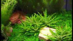 Aquarium NC20-01