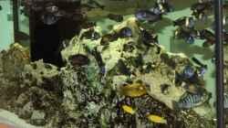 Aquarium Becken 125