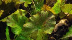 Pflanzen im Aquarium Becken 12579