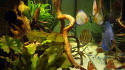 Aquarium Becken 12579