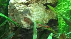 großer Pagodenstein - links im Becken
