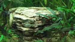 flacher Pagodenstein - in der Mitte des Beckens