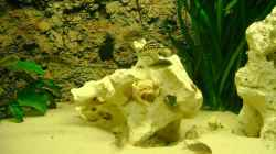 Dekoration im Aquarium Becken 12705