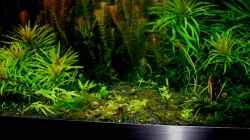 Besatz im Aquarium Farbenfrohes Steilufer