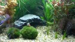 Dekoration im Aquarium Becken 12734