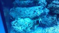 Besatz im Aquarium Becken 12777