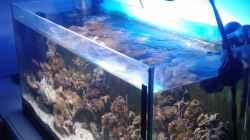 Aquarium Becken 12777