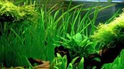 Pflanzen im Aquarium Underworld Australia