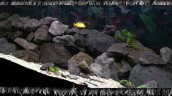 Aquarium Malawi