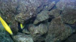Dekoration im Aquarium Malawi