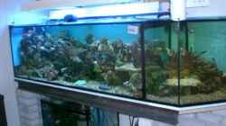Aquarium Becken 12881