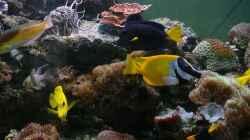 Besatz im Aquarium Becken 12881