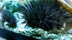 Pflanzen im Aquarium Becken 12881