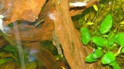 Besatz im Aquarium Becken 12899