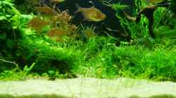 Besatz im Aquarium Gardeners pleasure