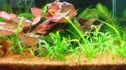 Pflanzen im Aquarium Becken 12967