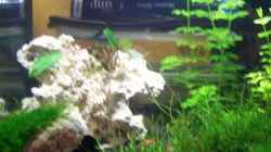 Dekoration im Aquarium Becken 13207