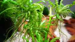 Die Pflanzen wachsen
