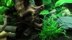 Dekoration im Aquarium Deenerle Nano 30l