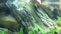 Dekoration im Aquarium ♠Amazonas♠