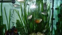 Besatz im Aquarium Fluval