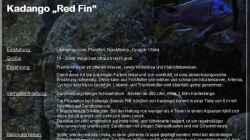 Übersicht Copadichromis borleyi Kadango `Red Fin`