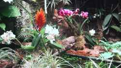 Orchideen, Bromelien, Tillandsien und Co.