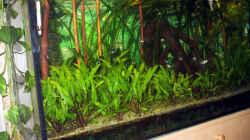 Aquarium Paludarium
