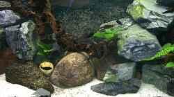 Aquarium Becken 139