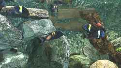 Besatz im Aquarium Becken 139