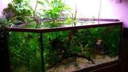 Aquarium Mco`s Aquarium