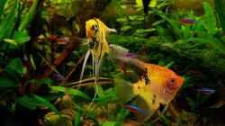 Besatz im Aquarium Mco`s Aquarium