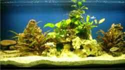 Aquarium nonmbuna becken