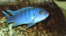 Besatz im Aquarium Atlantis
