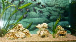 Dekoration im Aquarium Becken 1405